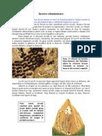 Animale si plante - Insecte colonizatoare
