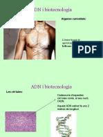 ADN i biotecnologia