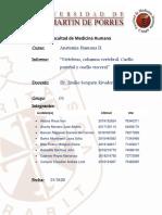 INFORME S1-GRUPO 01_RUBRO PRÁCTICA ANATOMÍA II (1)