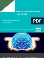 2._Bases_biologicas_de_la_conducta_humana._La_Neurona (1).pptx