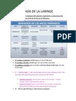 15.Embriología laringe 31-08-2020