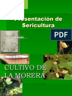 2.CULTIVO DE MORERA.ppt