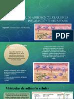 Papel de adhesión celular en la inflamación y metastasis