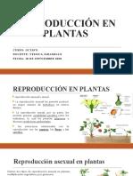 REPRODUCCIÓN EN PLANTAS 8º