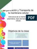 clase 3 Organización y Transporte de la membrana celular bueno