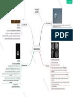 Mindmap Supergrup Rhizaria