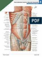 atlas_de_anatomia_humana_netter_6ed_medilibros.com_141
