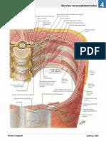 atlas_de_anatomia_humana_netter_6ed_medilibros.com_145