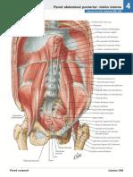 atlas_de_anatomia_humana_netter_6ed_medilibros.com_147
