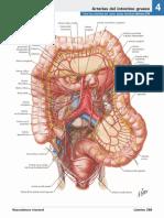 atlas_de_anatomia_humana_netter_6ed_medilibros.com_162