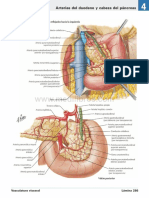 atlas_de_anatomia_humana_netter_6ed_medilibros.com_161