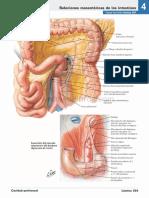 atlas_de_anatomia_humana_netter_6ed_medilibros.com_150