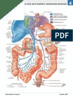 atlas_de_anatomia_humana_netter_6ed_medilibros.com_164