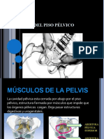 anatomadelpisoplvico.pptx