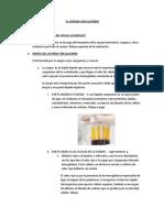 02 Martes 05 Ciencia EL SISTEMA CIRCULATORIO Y EXCRETOR (1).docx