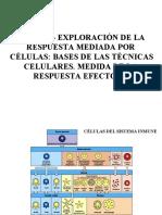 Tema 28 Exploración de la respuesta celular 2014-15