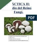 Práctica II El Reino Fungi