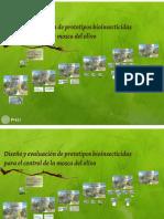 BIOINSETICIDAS Mediante La Utilización de Hongos Entomopatógenos
