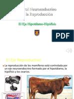 2-Clase Eje Hipotálamo-Hipófisis-20 1
