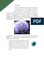 GENESIS DE LOS LEUCOCITOS.docx
