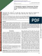 Kim Seong Hoon et al 2012 - Brazilin Isolated from Caesalpinia sappan Suppresses Nuclear