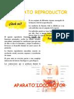 Aparatos (Anatomia).docx