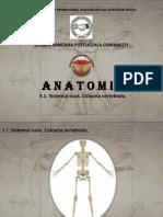 Anatomie curs 3.1