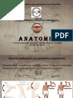 Anatomie curs 4.pdf