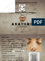 Anatomie curs 6