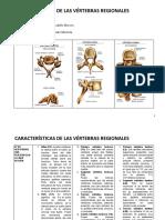 RESUELTO CARACTERÍSTICAS VERTEBRAS 2-20 (1)