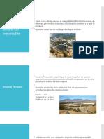 Actividad 2 ecologia.pptx