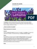 huertadecero.com-Cómo sembrar lavanda de semilla