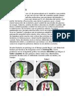Obesidad y NMG.pdf