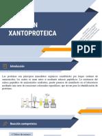 Reaccion xantoproteica ciclo 2.pptx