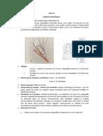 Guía Radiología # 4.docx