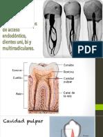 Anatomia interna pdf