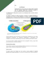 SESION N° 01 SEGUNDO GRADO.docx