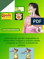 aparato respiratorio parte2