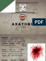 Anatomie curs 9