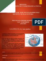 ACT 3 PARTES DE LA CELULA BIOLOGIA