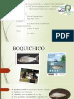 BOQUICHICO.pptx