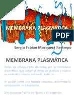 Presentación Membrana Plasmática
