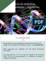 7. Síntesis de proteínas