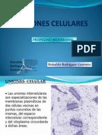 8. Uniones Celulares y El Glicocalix