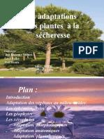 Exposé sur les adaptations des plantes à la secheresse.pptx