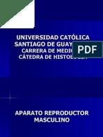 05.Aparato Reproductor Masculino.pdf