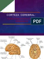 CORTEZA CEREBRAL Y AREAS CORTICALES