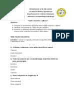 MARCHA DE LABORATORIO INTERACTIVA TEJIDO CONJUNTIVO
