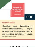 _ETAPAS DEL DESARROLLO HUMANO IV A.pdf