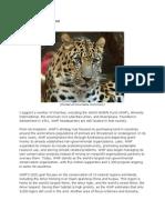 The World Wildlife Fund by Rory Vogel